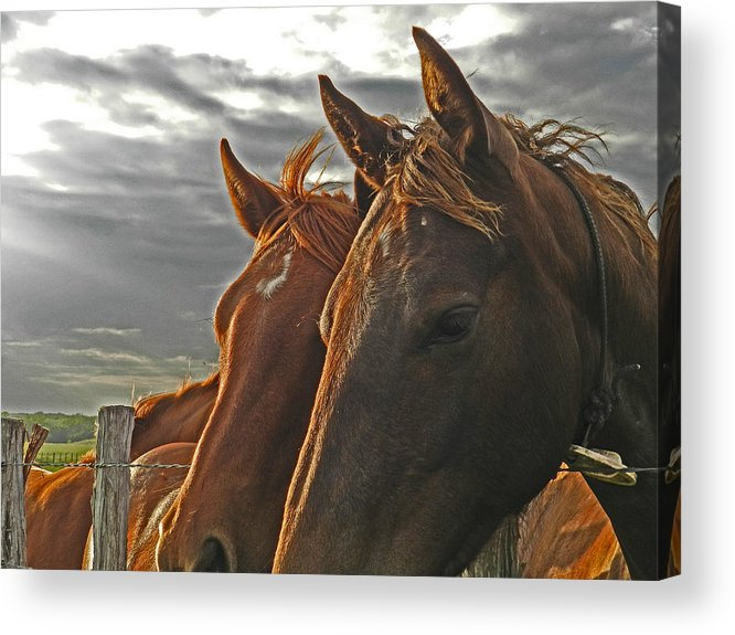 Horses Acrylic Print featuring the photograph Two Horses by Mamie Thornbrue