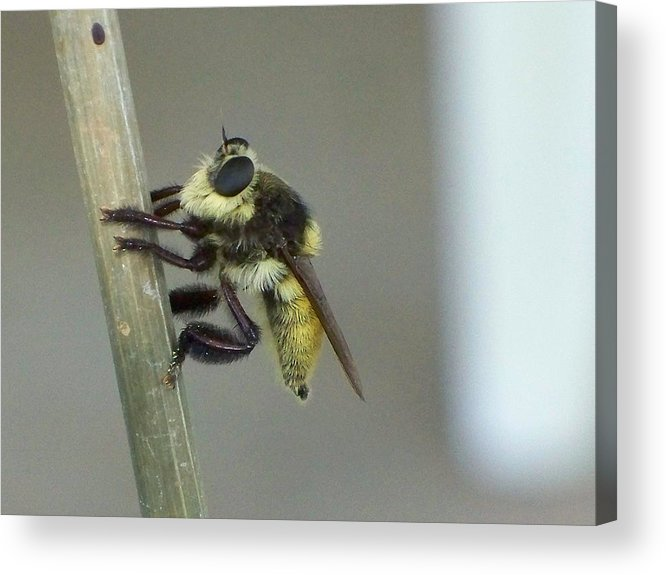 Insect Acrylic Print featuring the photograph What Big Eyes You Have by Judith B Adams