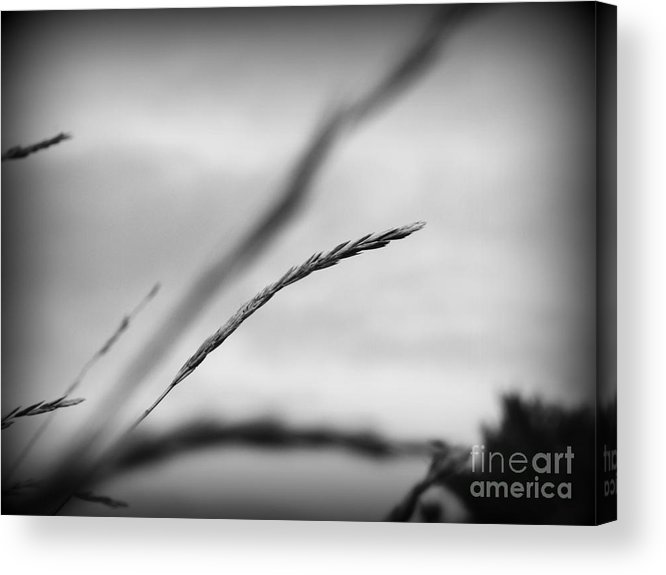 Grain Acrylic Print featuring the photograph Whisper by Christy Beal