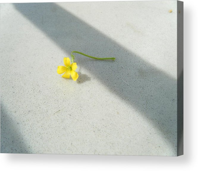 Sour-grass Acrylic Print featuring the photograph Yellow And Yellow by Cammie Keller