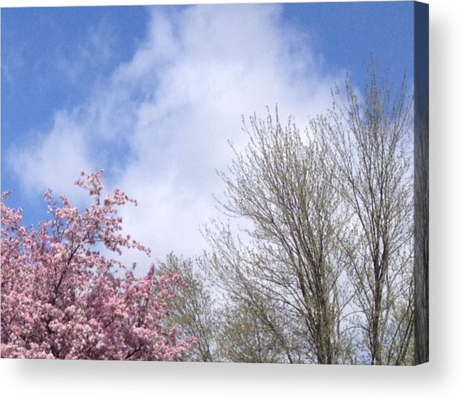 Photo Acrylic Print featuring the photograph Blue Skies 3 by Elva Kimble