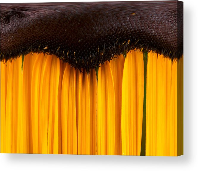 Lehtokukka Acrylic Print featuring the photograph The Curtains by Jouko Lehto