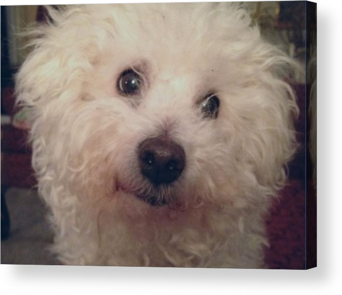 Photo Acrylic Print featuring the photograph Frosty by Elva Kimble