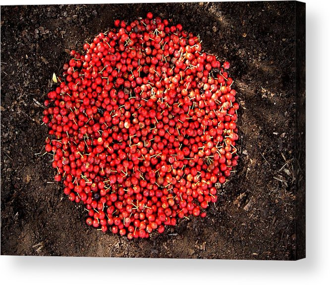 Red Berries Acrylic Print featuring the photograph Organize Red Berries by Lizzie Johnson