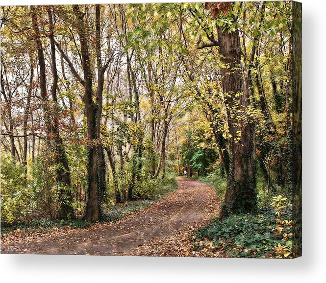 Trees Acrylic Print featuring the photograph The Woods In Autumn by Mikki Cucuzzo