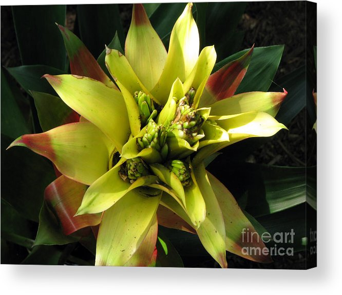 Tropical Acrylic Print featuring the photograph Tropical by Amanda Barcon