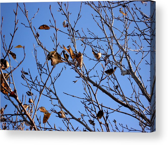 Nature Acrylic Print featuring the photograph Autumn Wind by Marilynne Bull