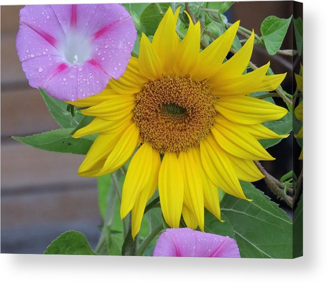 Vermomt Acrylic Print featuring the photograph Untitled by Susan Russo