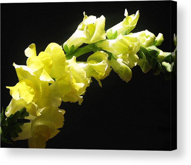 Floral Photos Acrylic Print featuring the photograph Nature Series by Ginger Geftakys