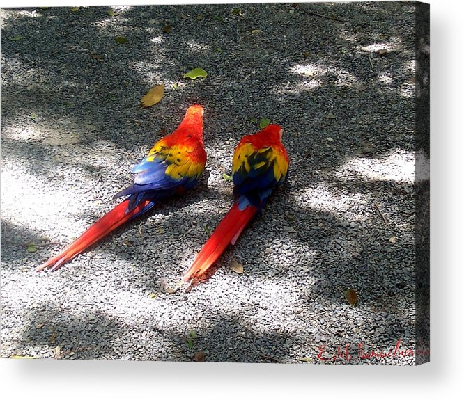 Bird Acrylic Print featuring the photograph A Pair Of Parrots by Elise Samuelson