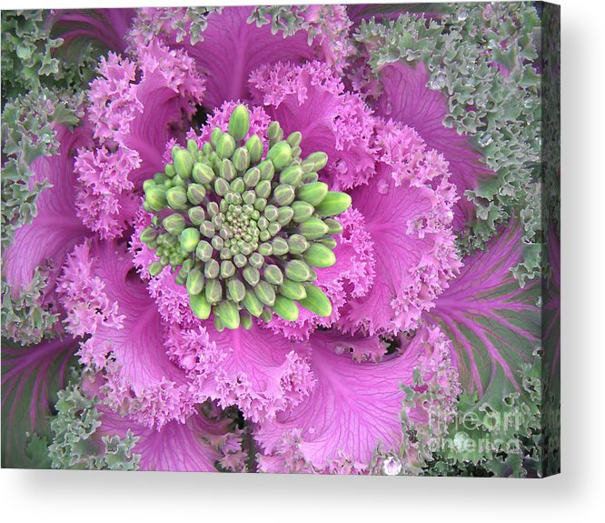 Nature Acrylic Print featuring the photograph A Study In The Shades Of Spring Three by Lucyna A M Green