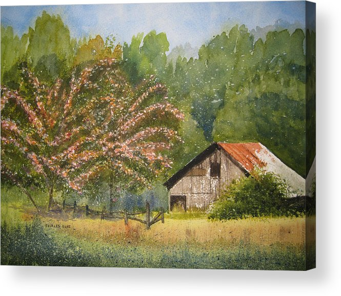 Mimosa Trees Acrylic Print featuring the painting Abandoned Mimosas by Shirley Braithwaite Hunt