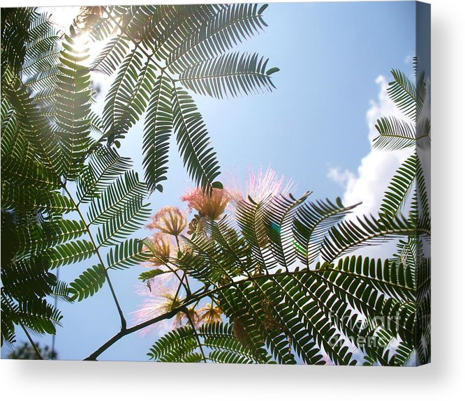 Flower Acrylic Print featuring the photograph Above by Stephanie Richards