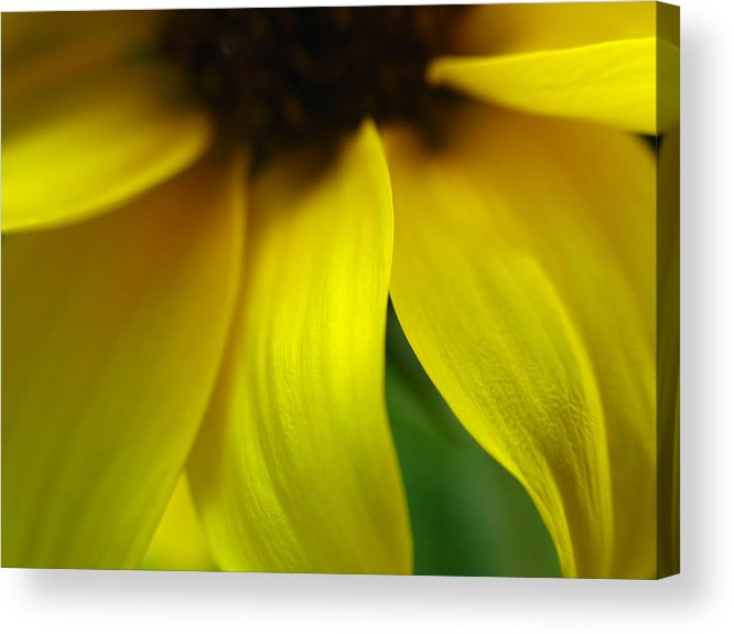 Sunflower Acrylic Print featuring the photograph Abstract Sunflower by Juergen Roth