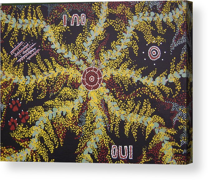 Acacia Blossoms Acrylic Print featuring the painting Acacia Blossoms In Oz by Laura Johnson