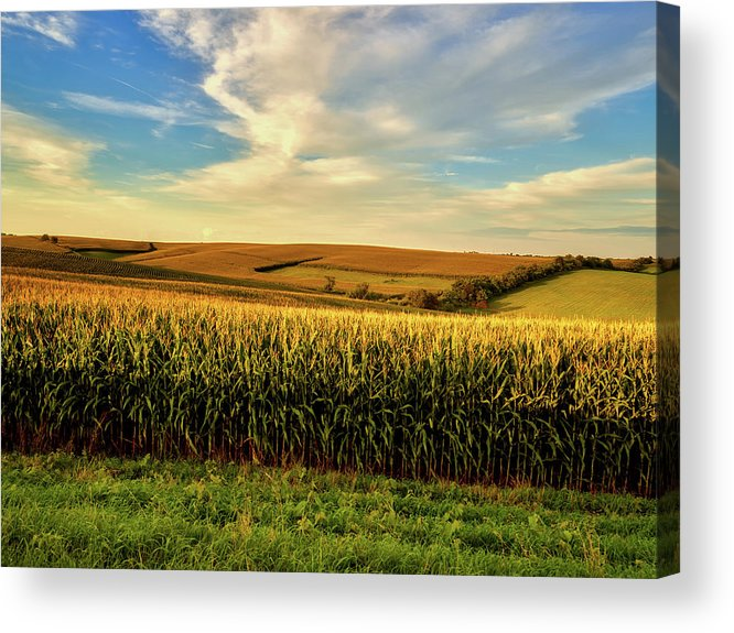 Jones County Acrylic Print featuring the photograph Amber Waves Of Grain by Mountain Dreams