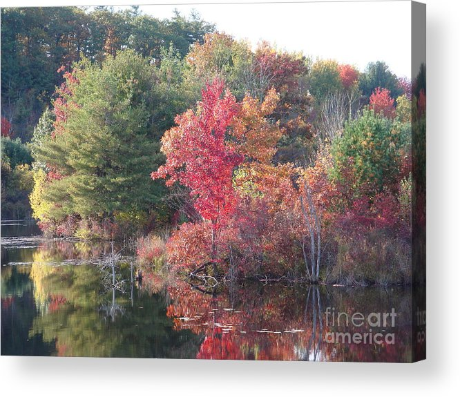 Autum Leaves Acrylic Print featuring the photograph An Autum Day by Robyn Leakey