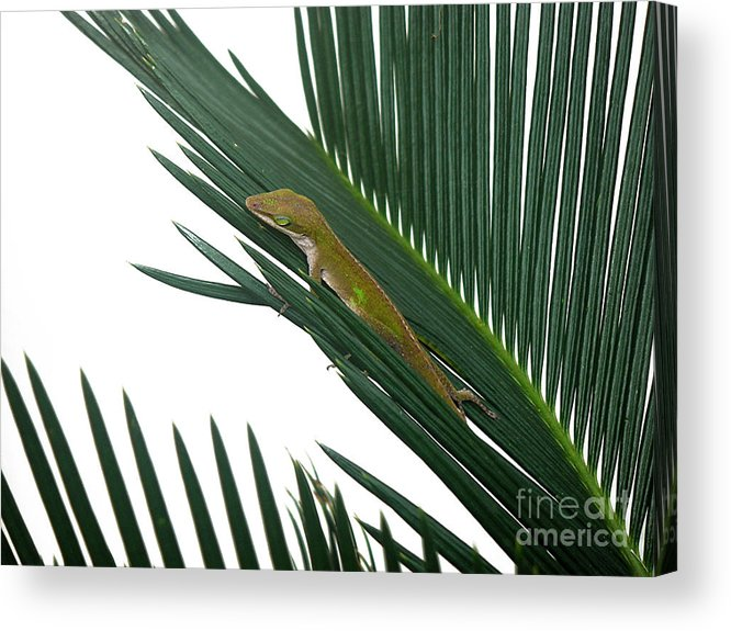 Nature Acrylic Print featuring the photograph Anole With Palm - Coy by Lucyna A M Green