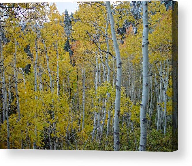 Aspen Acrylic Print featuring the photograph Aspen Colors by Derek Nielsen