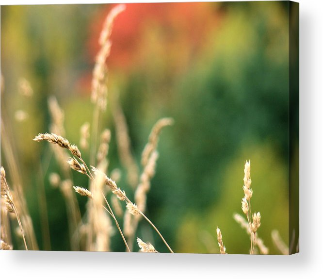 Bokeh Acrylic Print featuring the photograph Autumn Bokeh by Tingy Wende
