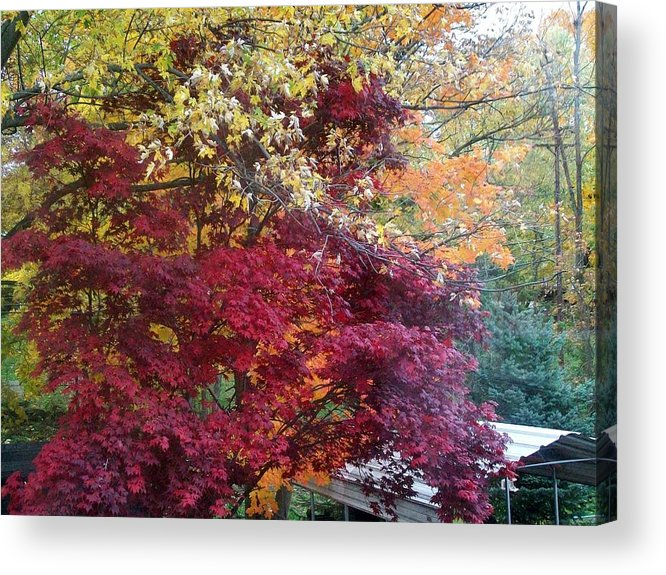 Tree Acrylic Print featuring the photograph Autumn In October by Misty VanPool