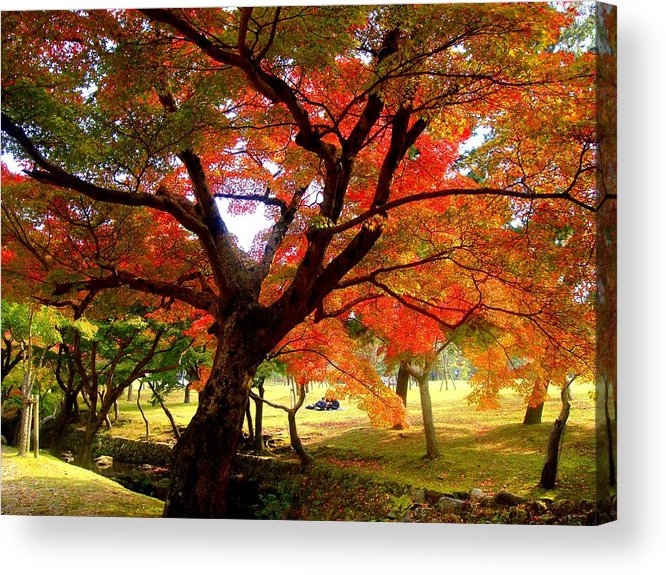 Autumn Acrylic Print featuring the photograph Autumn Leaves 2 by Roberto Alamino