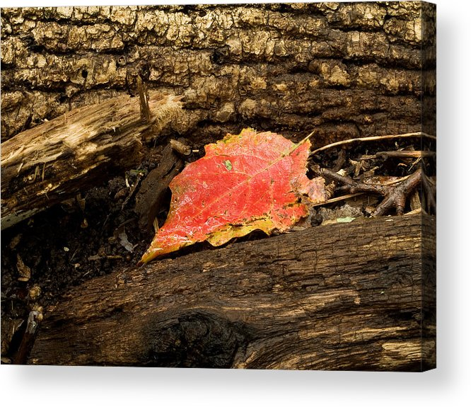 Death Acrylic Print featuring the photograph Autumn's End by Jim DeLillo