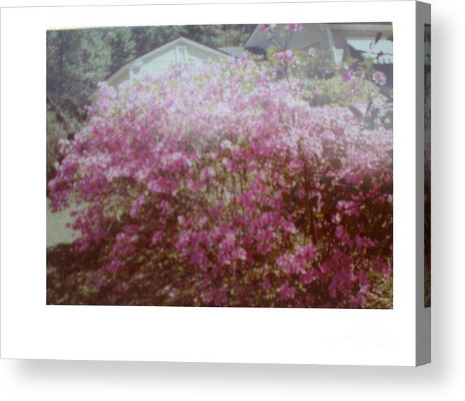 Azalea's Acrylic Print featuring the photograph Azalea Framed By Roof by Hal Newhouser