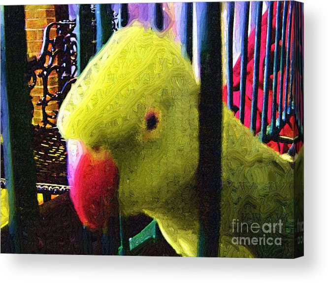 Parrot Acrylic Print featuring the painting Baby by Deborah Selib-Haig DMacq