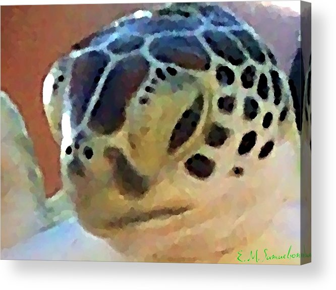Turtle Acrylic Print featuring the photograph Baby Turtle by Elise Samuelson