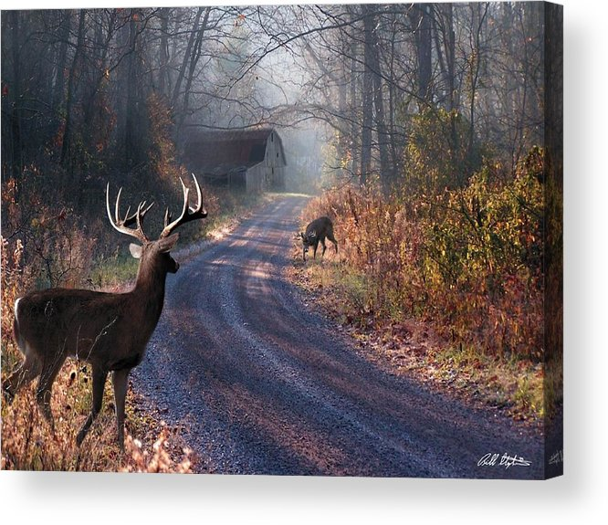 Deer Acrylic Print featuring the digital art Back Home by Bill Stephens