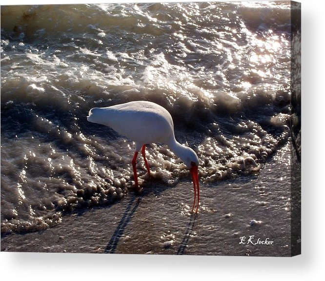 Beach Acrylic Print featuring the photograph Beach Bird by Elizabeth Klecker