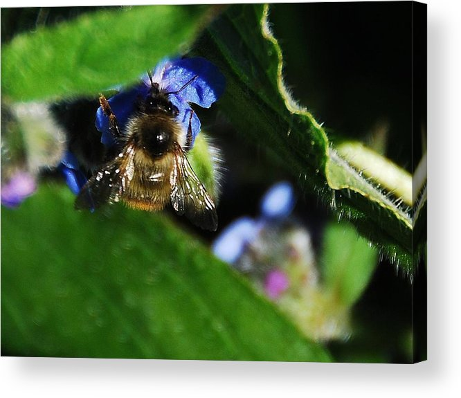 Acrylic Print featuring the photograph Bee by JK Photography