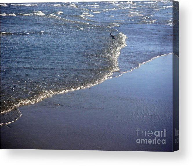 Nature Acrylic Print featuring the photograph Being One With The Gulf - At Peace by Lucyna A M Green