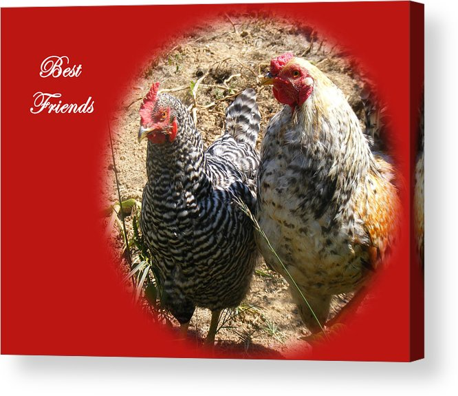 Chickens Acrylic Print featuring the photograph Best Friends by James and Vickie Rankin