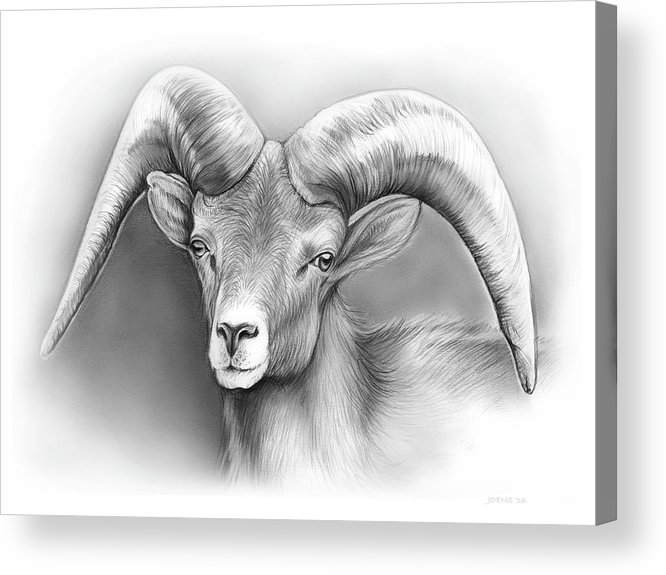 Bighorn Acrylic Print featuring the drawing Bighorn Ram by Greg Joens