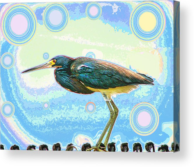 Bird Acrylic Print featuring the digital art Bird Contemplates The Cosmos by Wendy J St Christopher