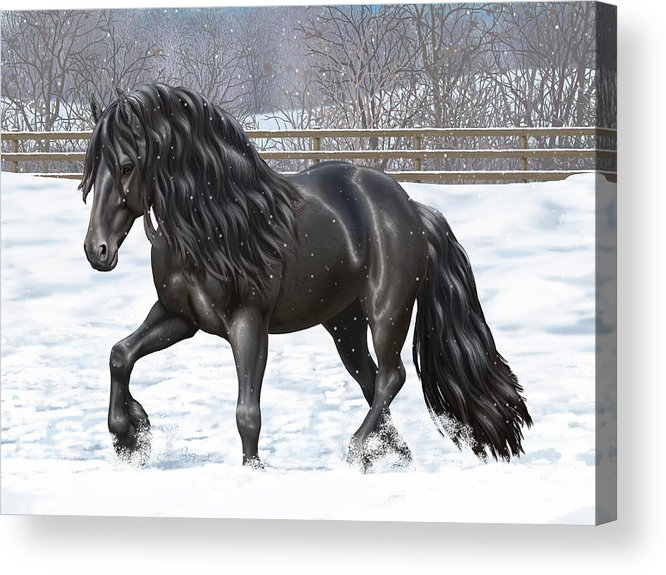 Horses Acrylic Print featuring the painting Black Friesian Horse In Snow by Crista Forest