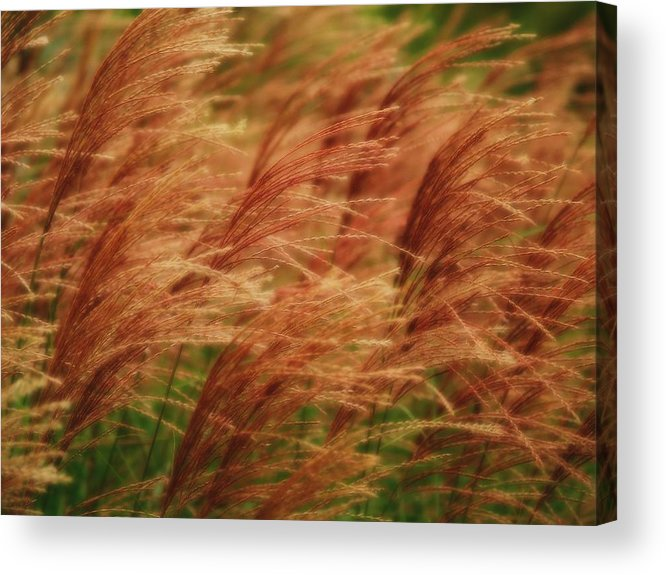 Win Acrylic Print featuring the photograph Blowing In The Wind by Gaby Swanson
