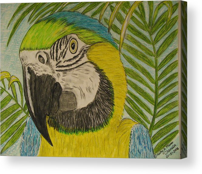 Macaw Acrylic Print featuring the painting Blue And Gold Macaw Parrot by Kathy Marrs Chandler