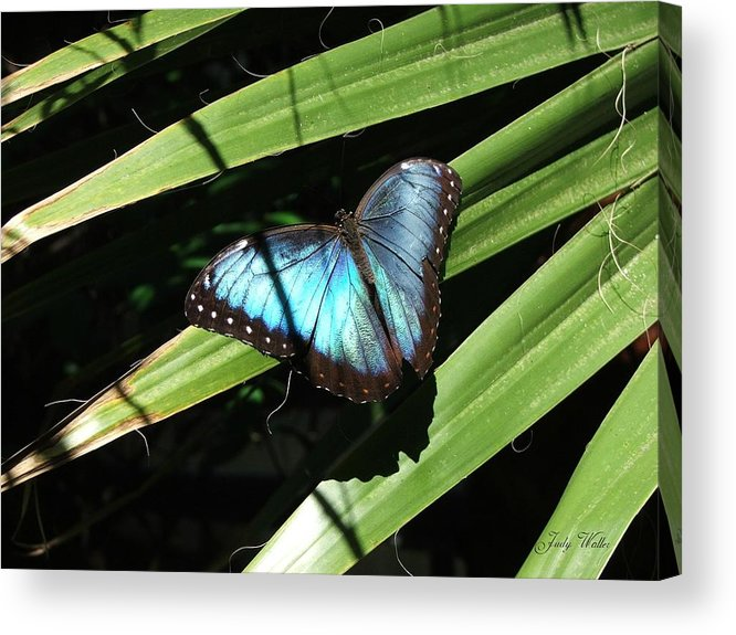 Blue Acrylic Print featuring the photograph Blue Beauty by Judy Waller