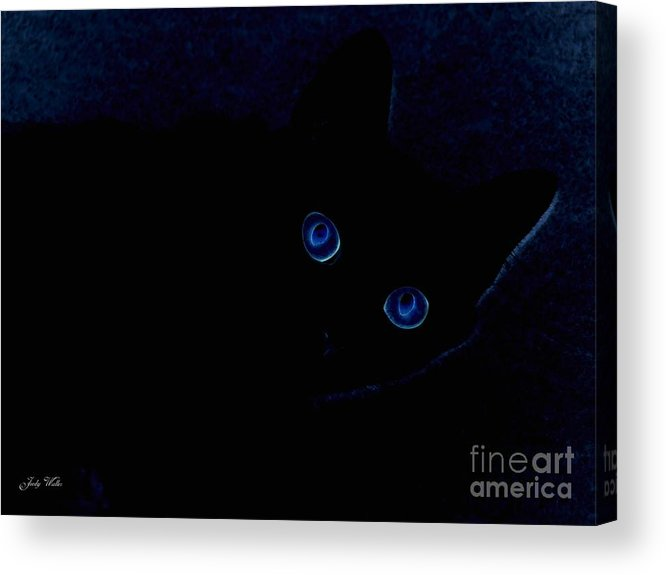 Cat-eyes Acrylic Print featuring the photograph Blue Cat Eyes by Judy Waller