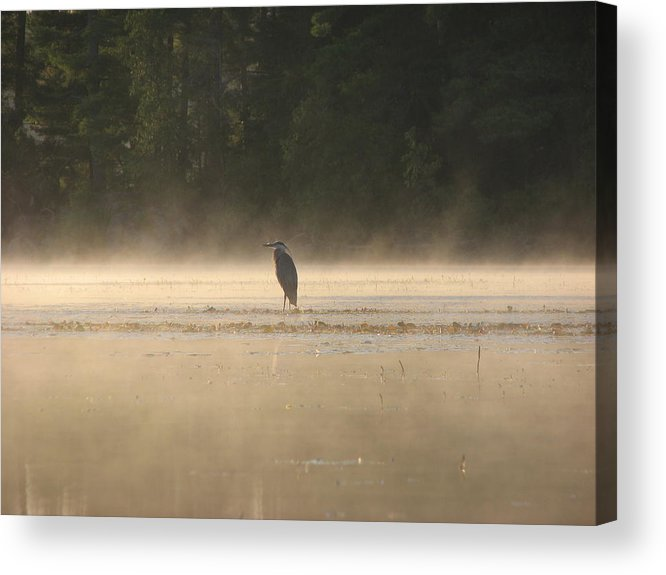 Blue Heron Water Fog Acrylic Print featuring the photograph Blue Heron Morning by Christopher Brown