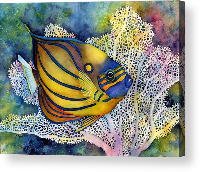 Fish Acrylic Print featuring the painting Blue Ring Angelfish by Hailey E Herrera