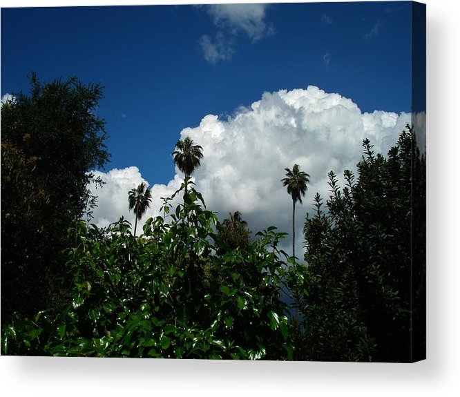 Bobbie's World Acrylic Print featuring the photograph Bobbie's World by Linda De La Rosa