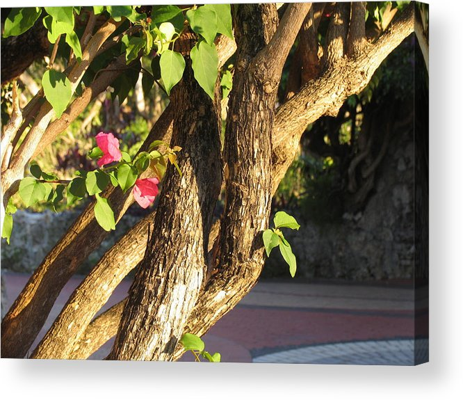 Pink Acrylic Print featuring the photograph Braided by Stephanie Richards