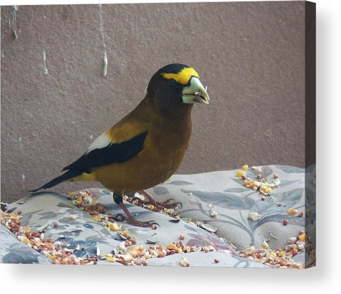 Bird Acrylic Print featuring the photograph Broad Beak by Laurie Kidd