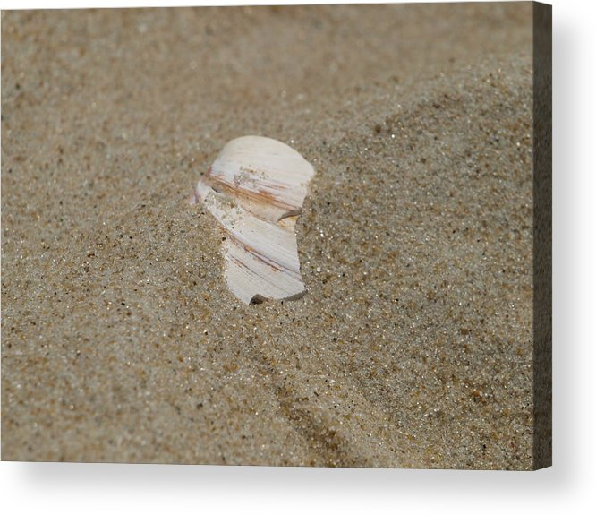 Sand Acrylic Print featuring the photograph Broken Shell by Kim