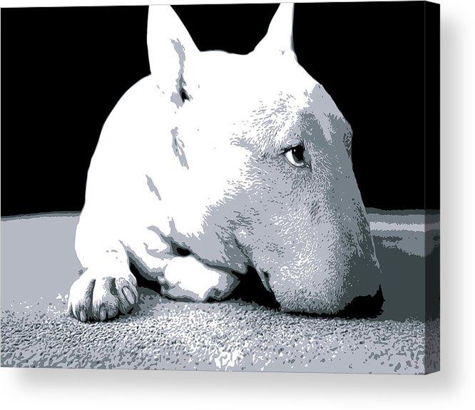 English Bull Terrier Acrylic Print featuring the digital art Bull Terrier White On Black by Michael Tompsett