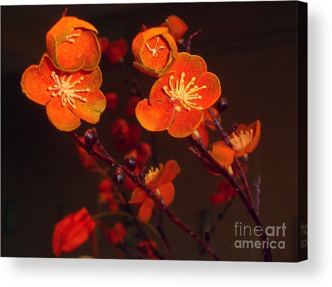 Flowers Acrylic Print featuring the photograph Bursting Into Bloom by Merton Allen